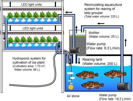 Aquaponics in Plant Factory - ScienceDirect