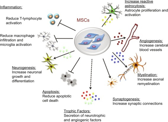 Mechanisms and Clinical Applications of Stem Cell Therapy