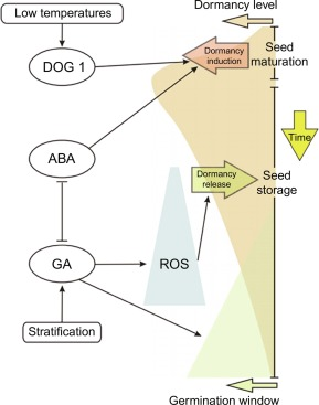 Germination - an overview | ScienceDirect Topics