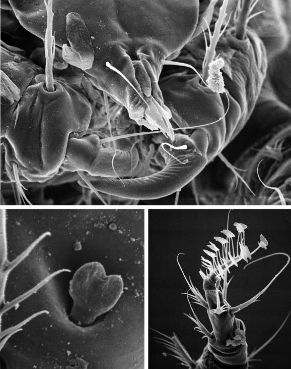 Cheyletiella - an overview | ScienceDirect Topics