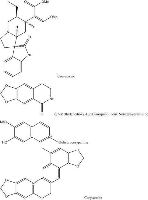 Gnetum - an overview | ScienceDirect Topics