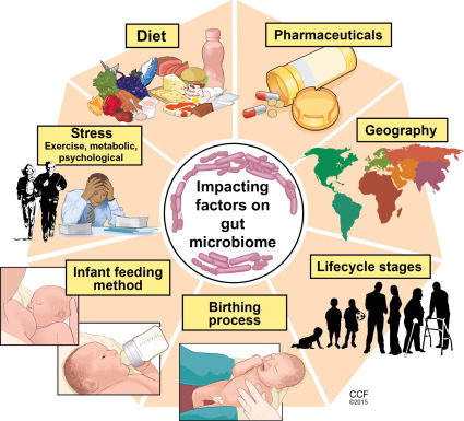 Gut Microbiome - an overview | ScienceDirect Topics