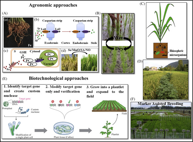 Plant Breeding - an overview | ScienceDirect Topics
