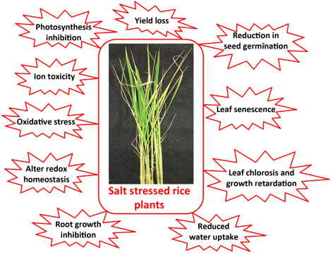 might grass growth be inhibited by salt