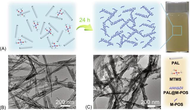 Palygorskite Nanomaterials Structure Properties And