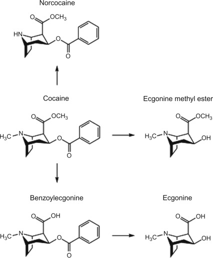 Cocaine - an overview | ScienceDirect Topics