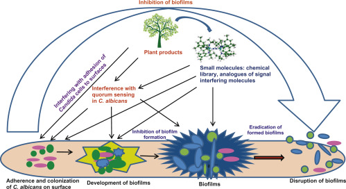 Insights of Phyto-Compounds as Antipathogenic Agents: Controlling