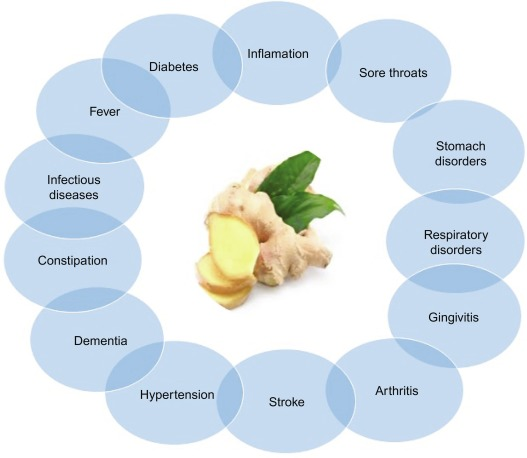 Ginger - an overview | ScienceDirect Topics