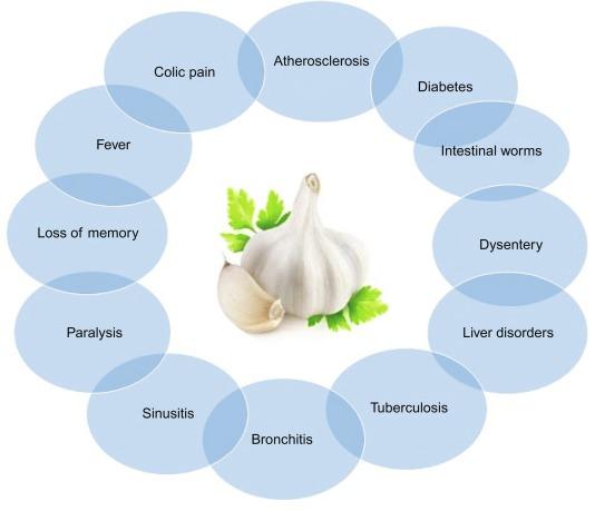 Allium sativum - an overview   ScienceDirect Topics