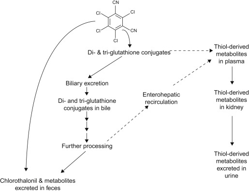 Chlorothalonil - an overview | ScienceDirect Topics