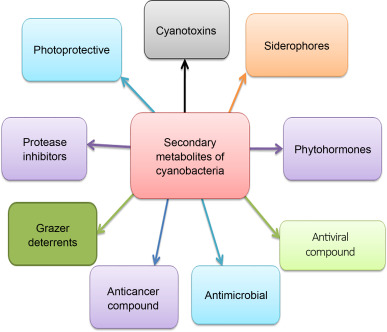 Secondary Metabolite - an overview | ScienceDirect Topics