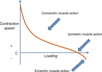 Eccentric Muscle Contraction - an overview | ScienceDirect Topics