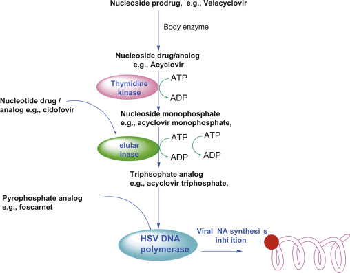 DNA Virus - an overview | ScienceDirect Topics