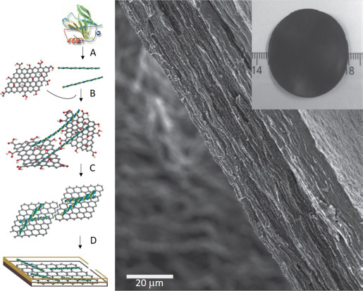 Protein nanofibrils: Preparation, properties, and possible
