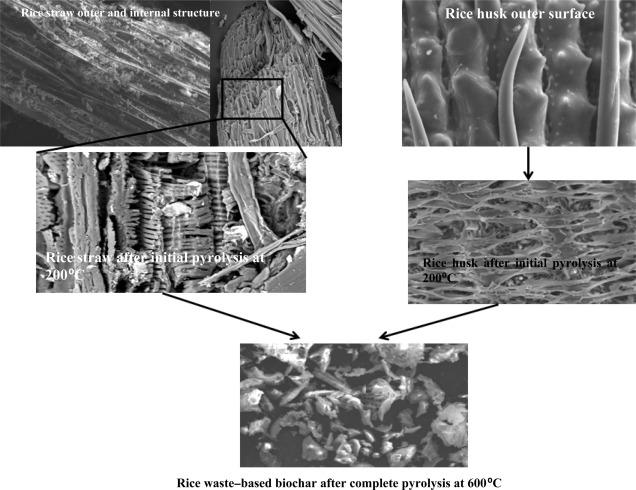 Biochar for Carbon Sequestration: Bioengineering for