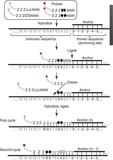 Nucleic Acid Techniques ScienceDirect