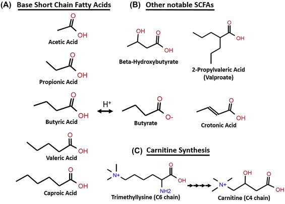 ketogenic diet short chain fatty acid