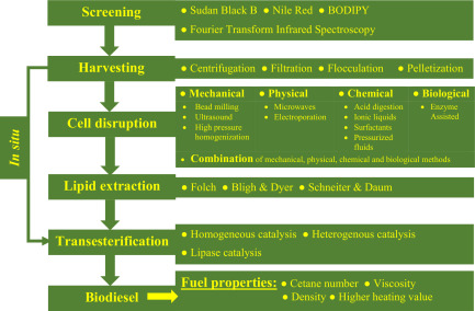 Trends in production and fuel properties of biodiesel from