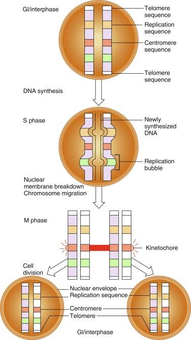 Regulation Of Gene Expression - ScienceDirect