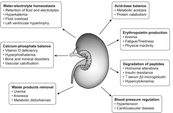 Kidney Disease And Nutrition In Adults And Children Sciencedirect