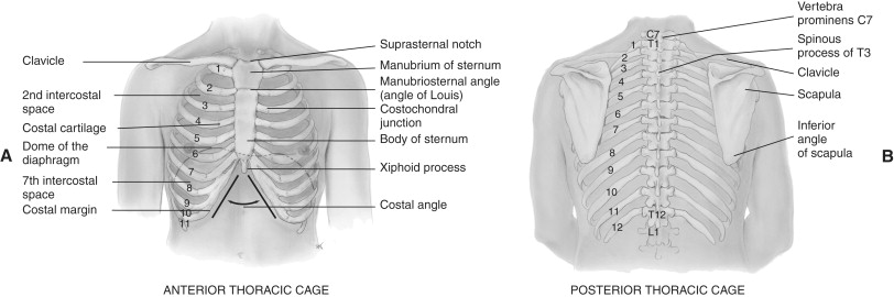 Skeletal Muscle Structure - an overview | ScienceDirect Topics