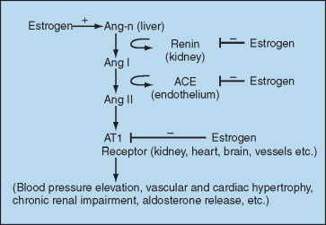 Estrogen - an overview | ScienceDirect Topics