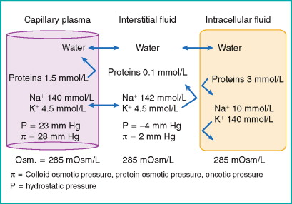 Osmotic Pressure - an overview | ScienceDirect Topics