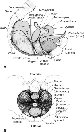 Bartholin Glands An Overview Sciencedirect Topics
