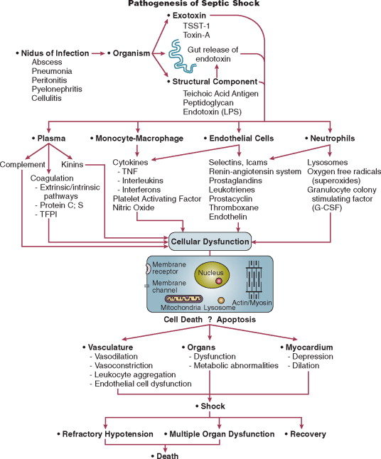 Septic Shock - an overview   ScienceDirect Topics