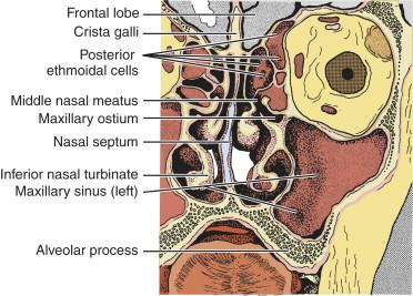 Paranasal Sinus - an overview | ScienceDirect Topics