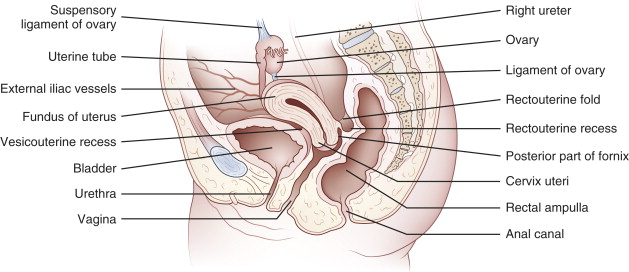 Recto-Uterine Pouch - an overview | ScienceDirect Topics
