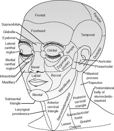 Surface Anatomy An Overview Sciencedirect Topics