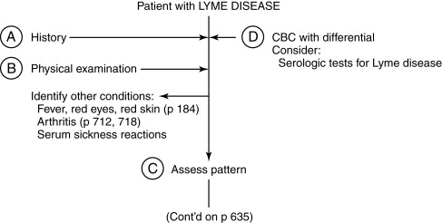 Lyme Disease - an overview | ScienceDirect Topics