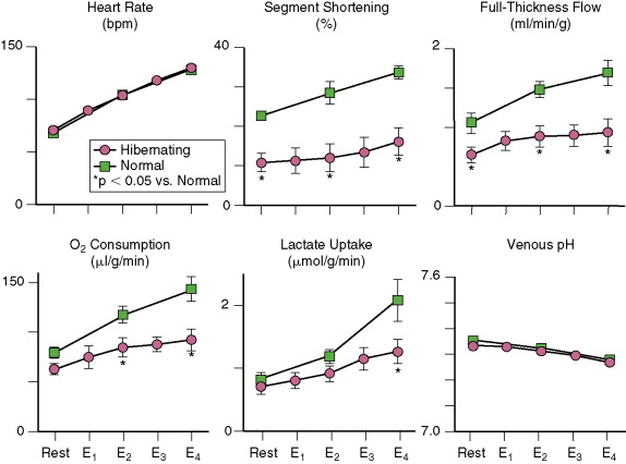Heart Muscle Oxygen Consumption - an overview | ScienceDirect Topics