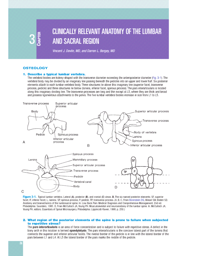 Clinically Relevant Anatomy Of The Lumbar And Sacral Region Spine