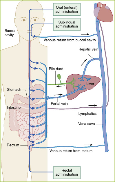 Sublingual Route - an overview | ScienceDirect Topics