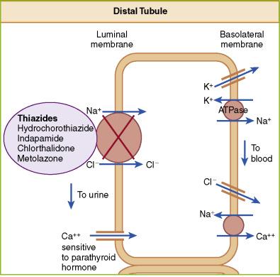 why give thiazide diuretics for diabetes insipidus