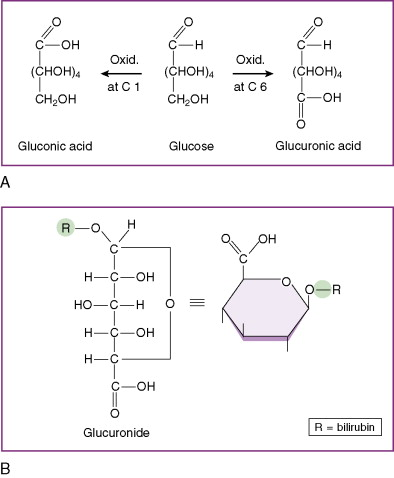 Carbohydrate Derivative - an overview | ScienceDirect Topics