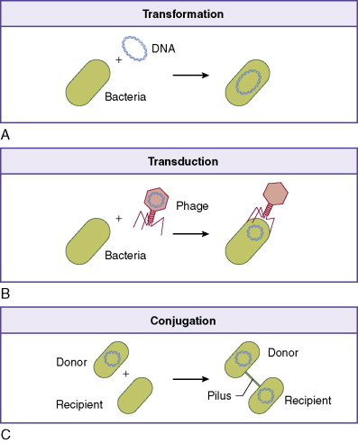 Bacterial Conjugation - an overview | ScienceDirect Topics