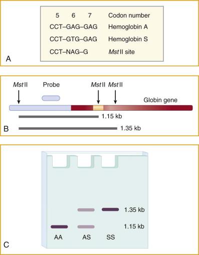 Single Gene Disorder An Overview ScienceDirect Topics