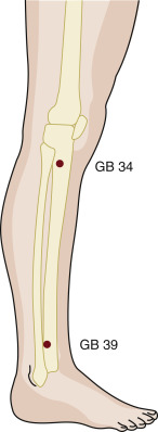 Acupuncture Point - an overview | ScienceDirect Topics
