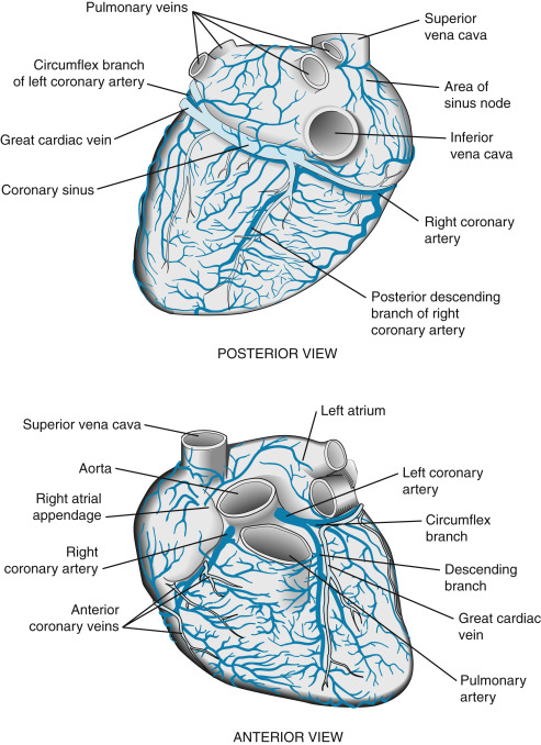 Right Coronary Artery An Overview Sciencedirect Topics