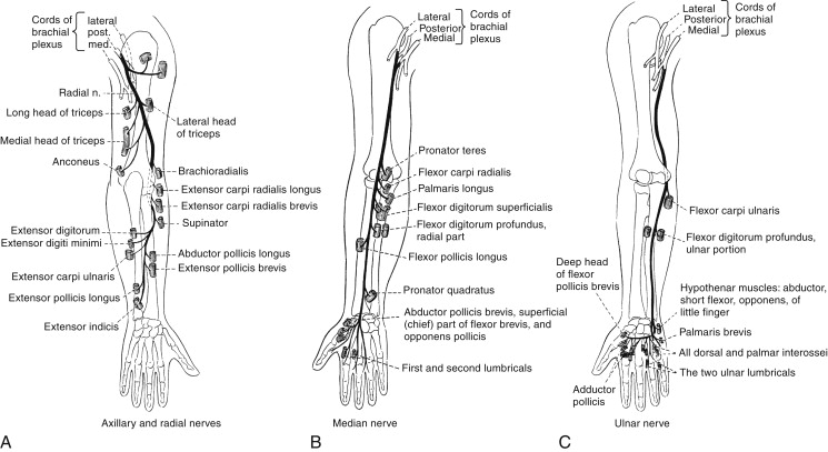 Functional Anatomy - an overview | ScienceDirect Topics