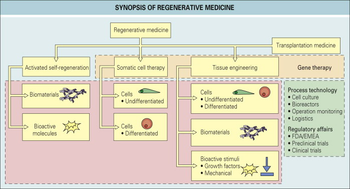 Functional Tissue Engineering - an overview   ScienceDirect Topics