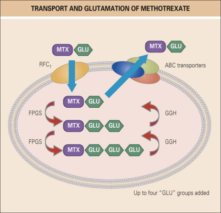 7 Hydroxymethotrexate - an overview | ScienceDirect Topics