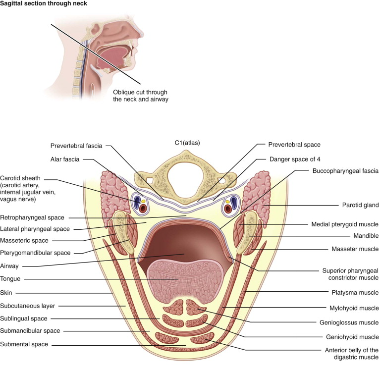 Submandibular Space An Overview Sciencedirect Topics
