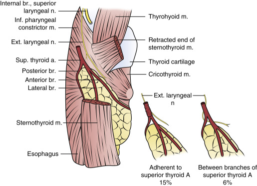 Cricothyroid Muscle An Overview Sciencedirect Topics