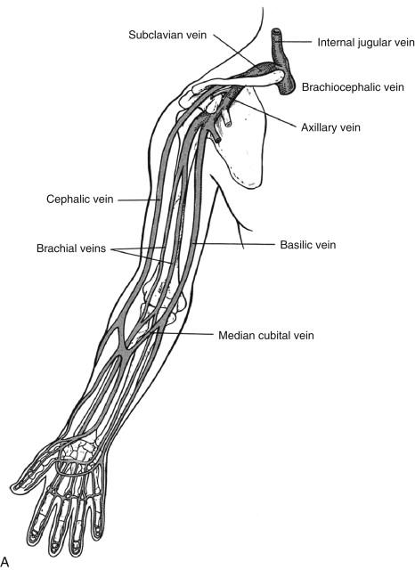 basilic vein an overview sciencedirect topics