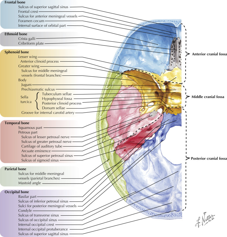 Anterior Cranial Fossa An Overview Sciencedirect Topics