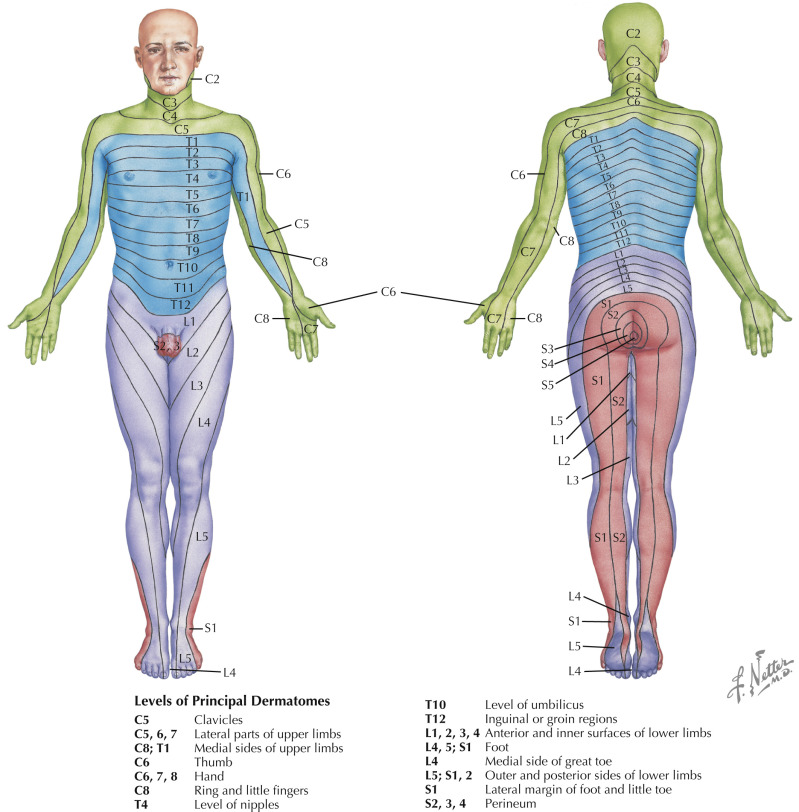 Dermatome An Overview Sciencedirect Topics